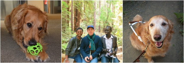 Collage of 3 photos: WID's youngest service dog Alabama, staff member Tom shows two international fellows Muir Woods, WID's retired service dog Carrera